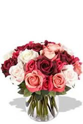 Budding Love - 24 Roses